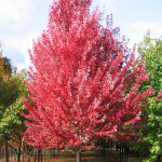 1493 acer redpointe 3