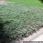 2980 blue rug juniper