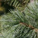 3027 vanderwolf pine