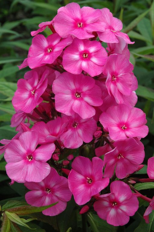 Hot Pink Flowers Border Hot Pink Flowers With